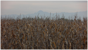 Agriculture Lherm